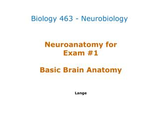 Neuroanatomy  for  Exam #1 Basic Brain Anatomy Lange