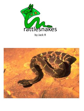 rattlesnakes by Jack R
