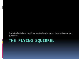 The flying squirre l