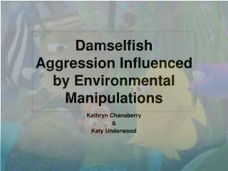 Damselfish Aggression Influenced by Environmental Manipulations