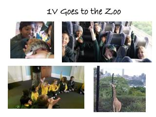 1V Goes to the Zoo