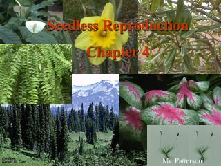 Seedless Reproduction Chapter 4