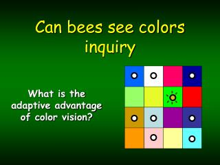 Can bees see colors inquiry