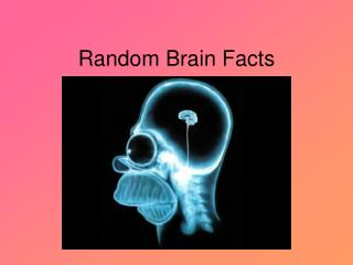 Random Brain Facts