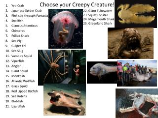 Yeti Crab Japanese Spider Crab Pink see-through Fantasia Snailfish Glaucus Atlanticus  Chimeras