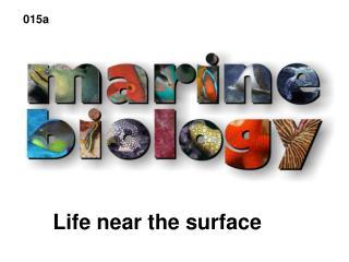 Life near the surface