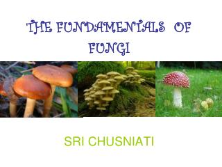 THE FUNDAMENTALS  OF FUNGI
