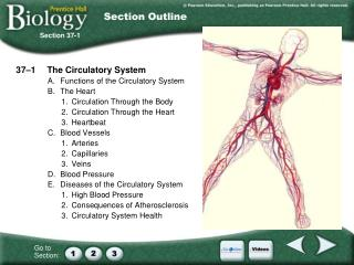 37–1The Circulatory System A.Functions of the Circulatory System B.The Heart 1.Circulation Through the Body 2.Circu