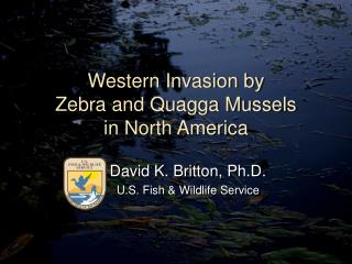 Western Invasion by  Zebra and Quagga Mussels  in North America
