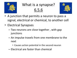 What is a synapse? 6.5.6