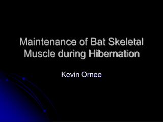Maintenance of Bat Skeletal Muscle during Hibernation