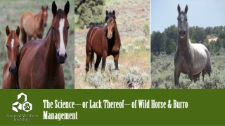 The Effects of Grazing Management on Water Quality