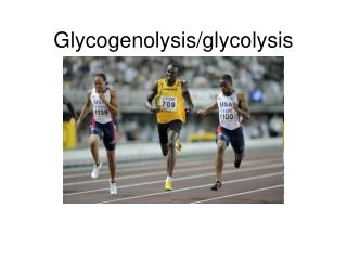 Glycogenolysis/glycolysis