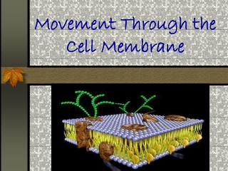 Movement Through the Cell Membrane
