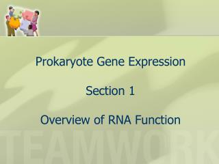 Prokaryote Gene Expression Section 1 Overview of RNA Function