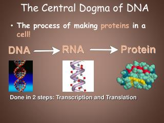 The Central Dogma of DNA