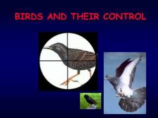 BIRDS AND THEIR CONTROL