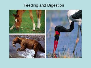 Feeding and Digestion
