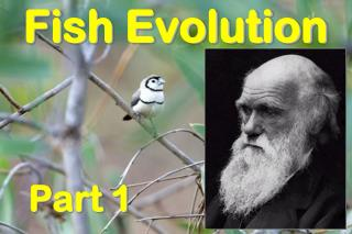 Fish Evolution