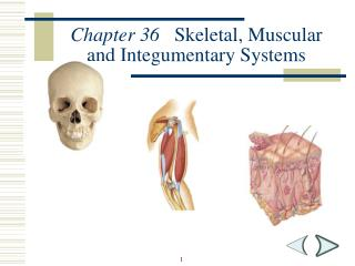 Chapter 36    Skeletal, Muscular and Integumentary Systems