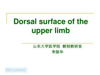Dorsal surface of the upper limb