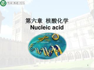 第六章 核酸化学 Nucleic acid