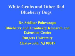White Grubs and Other Bad Blueberry Bugs