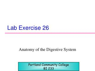 Lab Exercise 26