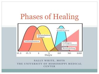 Phases of Healing