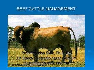 BEEF CATTLE MANAGEMENT