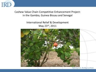 Cashew Value Chain Competitive Enhancement Project:  in the Gambia, Guinea Bissau and Senegal International Relief & Dev