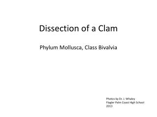 Dissection of a Clam