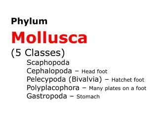 Phylum Mollusca (5 Classes) Scaphopoda Cephalopoda – Head foot