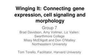 Winging It: Connecting gene expression, cell signaling and morphology