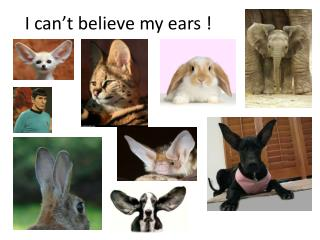 I can't believe my ears !