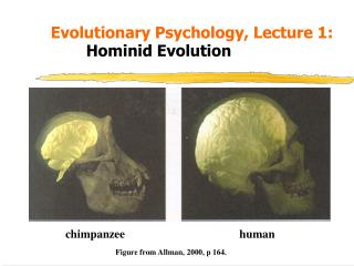 Evolutionary Psychology, Lecture 1:   Hominid Evolution