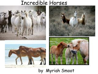 Incredible Horses