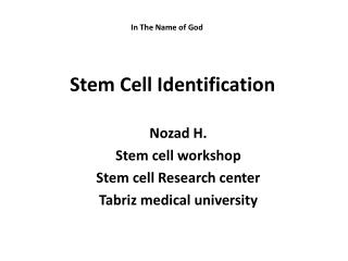 Stem Cell Identification