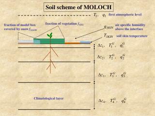 Soil scheme of MOLOCH