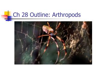 Ch 28 Outline: Arthropods