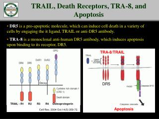 TRAIL, Death Receptors, TRA-8, and Apoptosis