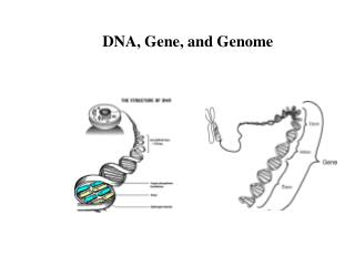 DNA, Gene, and Genome