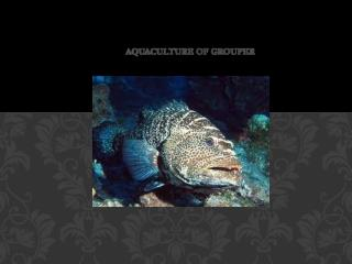 Aquaculture Of Grouper