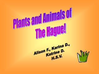 Plants and Animals of               The Hague!
