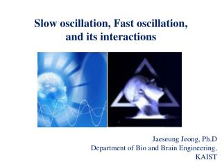 Slow oscillation, Fast oscillation,  and its interactions