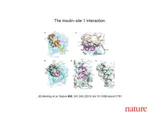 JG Menting  et al. Nature  493 , 241-245 (2013) doi:10.1038/nature11781