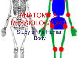 ANATOMY & PHYSIOLOGY 241