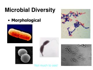 Microbial Diversity