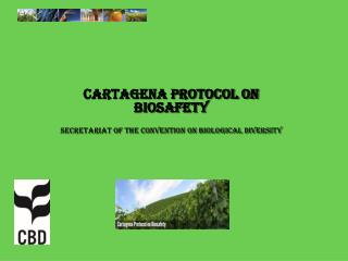 Cartagena Protocol on  Biosafety Secretariat of the Convention on Biological Diversity