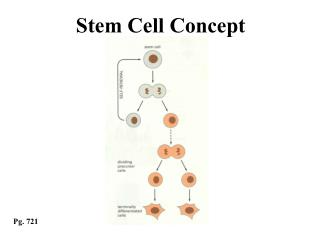Stem Cell Concept